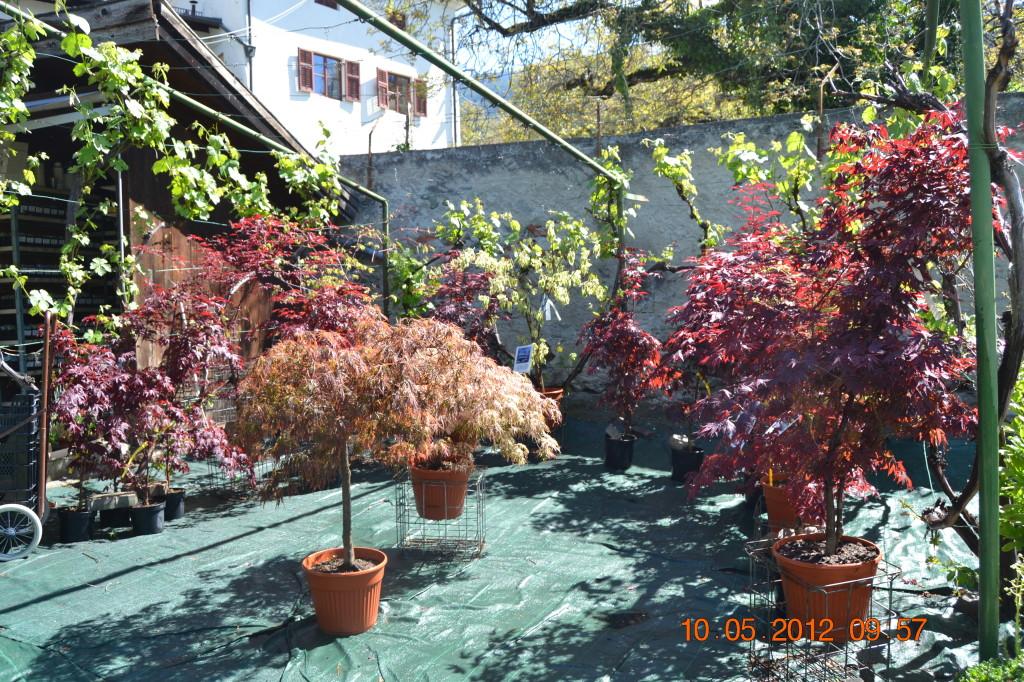 I nostri prodotti staudenparadies bressanone piante da for Piante ornamentali perenni